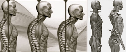 """""""For every inch of forward head posture, it can increase the weight of the head on the spine by an additional 10 pounds."""" (Kapandji,  Physiology of the Joints, Volume 3 )"""